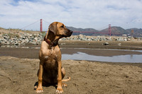 Rosie, Tula, Freddy and other doggie friends on Crissy Field
